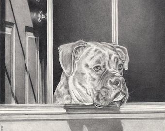 Portrait animalier personnalisé + complexe de fond 11 x 14