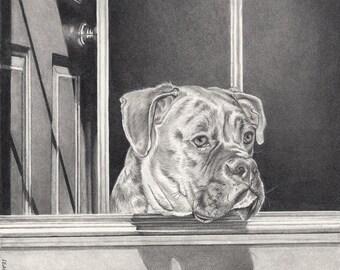 Custom Pet Portrait + Complex Background 11x14