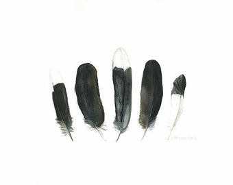 Australian Magpie Print of Magpie Feather Painting, 16 x 12 Inch Print, 19 x 13 Inch Wall Art, Black and White Feathers, Australian Art