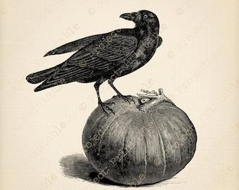 HALLOWEEN digital download - RAVEN Crow Bird PUMPKIN  Instant download printable clip art - iron on transfer - fabric transfer graphics