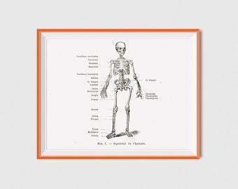 Human Skeleton Anatomy Print, Skeleton Printable Vintage Art, Human Skeleton Print, Human Skeleton Art Print, Skeleton Wall Art Anatomy Art