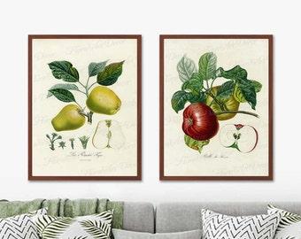Set of 2  Fruit Prints Wall Art Prints -Botanical Vintage Apple Print -  Posters Illustration Vintage Botanical -  Kitchen Art