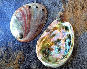 "Red Abalone Seashells (2 pcs.) - (3-3.5"") - Haliotis Rufescens"