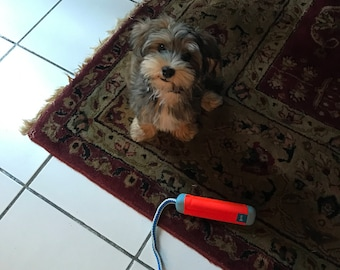 Handmade color photo of cute puppy
