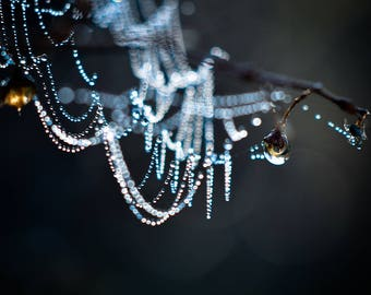 Spider Web Photography, Nature Photo Print, Sparkly Cob Web Picture, Dew Drop Home Decor, Horizontal Wall Art, Dew Covered SpiderWeb Photo