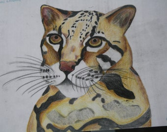 Clouded Leopard Drawing