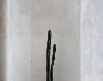 Photo de cactus, cactus print, toile de cactus ou imprimer, photo minimaliste, décor sud-ouest, Arizona photo, photo du désert, tons de terre