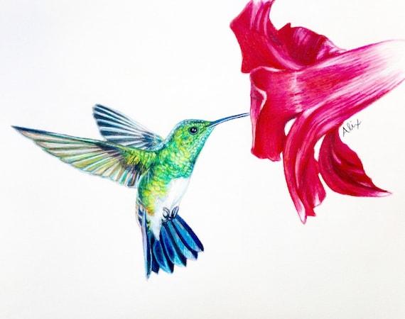 Colibrí dibujo ORIGINAL a lápiz de color