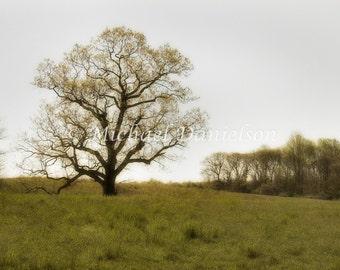 Fine Art Photograph Branches Print 8x10