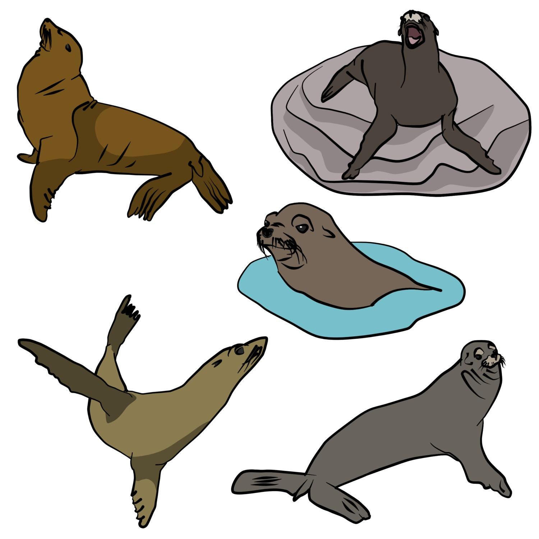 california sea lion clip art digital download vector artwork from rh etsystudio com sea lion swimming clip art sea lion clip art black and white