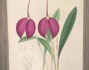 Antique Botanical Print, J N Fitch Orchid Print, Original Botanical Plate, Hand Colored Print, Purple Botanical