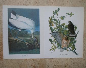 Lot of 24  Audubon Prints - FREE SHIPPING - Herons Grouse Turkey Woodpecker Crane 5/6