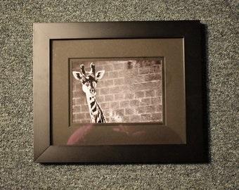 Giraffe Profile - 5x7 Photograph in 8x10 Frame