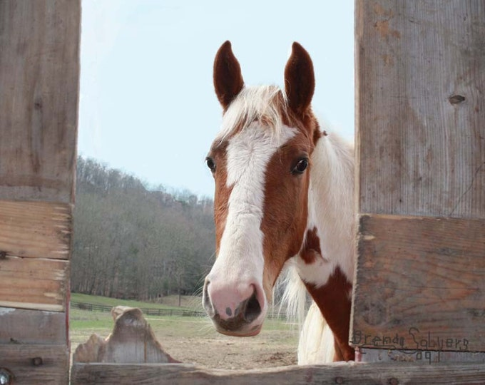 Kentucky, Morehead, Curious Little Brown Horse, Fine Art Print on Paper or Canvas