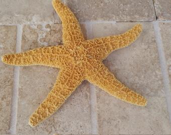 Orange Starfish - Large Sugar Starfish - Sea Star - Ask for Int'l ship rates