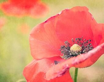 Summer Poppy Photograph - Wall Art, Photo Canvas, Fine Art Photography, Red, Green, Flowers, Garden Art