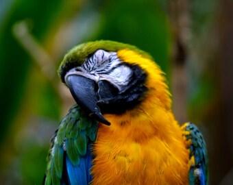 Macaw, Wildlife Photography, Nature Photography, Bird Photogeraphy