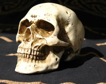 Human Skull Replica~Small~Bone colored~Altar and home Decoration