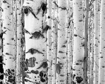 Aspens trees photo, Colorado art, aspen tree wall art, Black White photo, modern wall decor, rustic wall decor, log cabin decor | Iconic