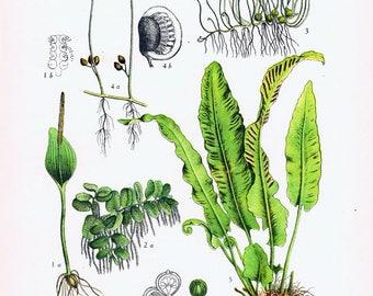 Original Botanical Print.fern.RARE.Vintage.Antique.Genuine.1929.French.Art.Classic.Mom.Dad.greemery.Plant.pretty picture.eco.flower.boho.mom