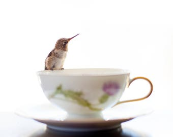 Tea for One ii, Hummingbird Photo Print