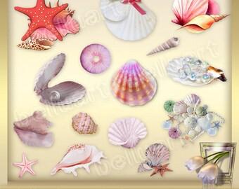 15 Shells Clip Art Vol. 1 - Seashell Clipart -  Sea Clipart - Nautical Clipart - Ocean ClipArt - Sea Shells clipart - Instant Download