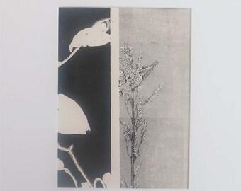 Small original contemporary botanical mono print by Stef Mitchell. Nature print Influenced by Art Nouveau