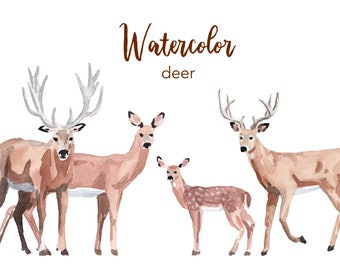 WATERCOLOR CLIPART, deer clipart, watercolour clipart set, commercial use, png files, baby deer clip art, woodland, png, digital, nursery