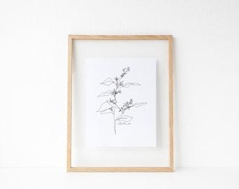 "Eucalyptus Line Drawing // 8x10"" or 8.5x11"" Print"