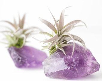 Amethyst Crystal Air Plant, Birthday Gift, Sister Gift, BFF Gift, Amethyst Geode Girlfriend Gift, Anniversary Gift, Mom Gift Purple Gift