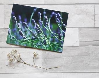 Lavender photo card  | birthday card | photo print | flower photo card | card for her | flower | card for gardener | lavender | purple flowe