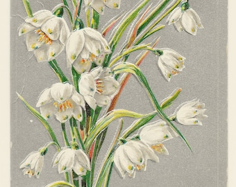 Silver Snowdrops Easter Postcard, 1934