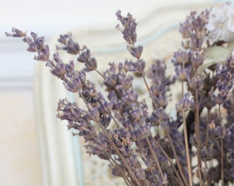 French Lavender - Provence Lavender Blooms - French Country Cottage Chic Bouquet  - Original Color Photograph by Suzanne MacCrone Rogers