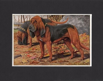 Bloodhound 1919 Dog Print by Louis Agassiz Fuertes Small Vintage Print Mounted with Mat  Bloodhound Print Bloodhound Dog Print