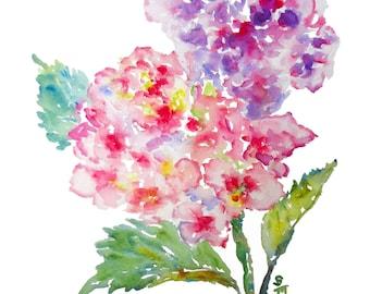 Hydrangea Duet, Watercolor Fine Art Print, 8x10, Watercolor Hydrangeas, Watercolor Flowers