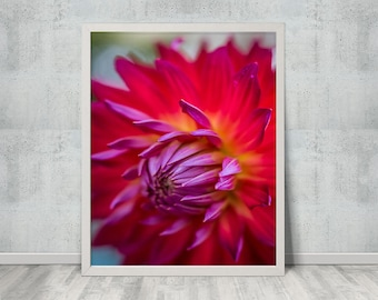 Flower Photo, Print, Flower photography, Floral Artwork, Flower Artwork, Flower Library, Gallery wall
