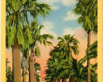 Lower Rio Grande Valley Texas Stately Palms Vintage Postcard (unused)