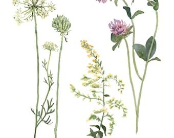 Fall Wildflowers, 8 x 10 Watercolor Art Print of Midwest Wildflowers