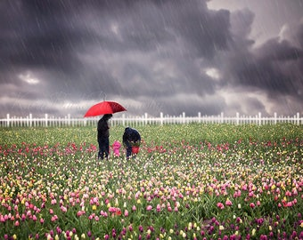 Flower Field Print, Rainy Day Art, Red Umbrella, Stormy Clouds Art, Tulip Field, Spring Flowers, April Showers, Family Art Print, Fine Art