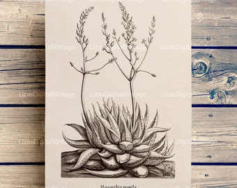 Succulent print, Botanical print, Succulent wall art, Botanical printables, Succulent art print, Antique wall art, Botanical PNG JPG 300dpi