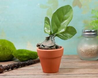 Potted Mandrake, Mandrake Sculpture, Mandrake Root, Mandrake Plant, Mandrake Root Sculpture, Mandragora, Magical Creatures, Paper Clay