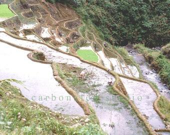 "Reprinted photograph: ""Rice Terraces, Banaue"". 4""X 6 1/4"" blank folded card"