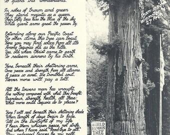 Vintage California Redwood Tree House Postcard