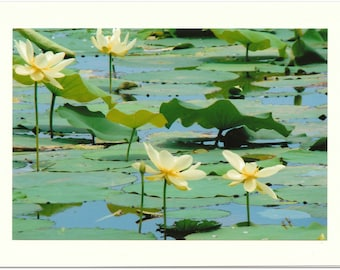 Lovely Lily Pad Photo Note Cards - Set of TEN