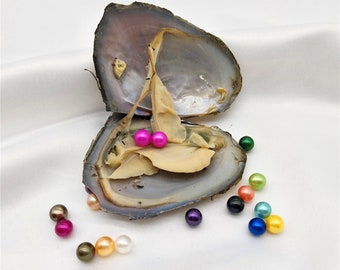 10 PCS Freshwater Oysters with Twins Rainbow Colored Round Pearl Inside, Pearl Party