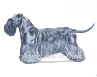 Cesky Terrier Dog - Archival Fine Art Print - AKC Best in Show Champion - Breed Standard - Terrier Group - Original Art Print