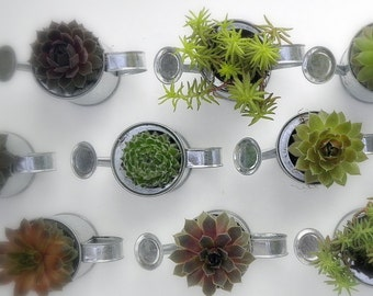 Succulent Favors, Rock Your Party with 40 Mini Sprinkling Watering Cans