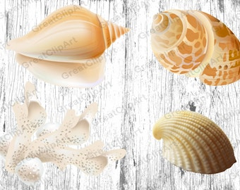 4 Shell clipart, starfish clipart, coral clipart, sea clipart, ocean clipart, beach clipart,digiral shell,rainbow shell,scrapbooking clipart