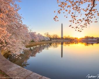 Cherry Blossom Print - Washington DC Photography - Washington Monument Photo - DC Photography - Sunrise - Cherry Blossom Festival,