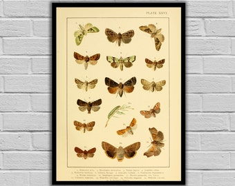 Vintage Moths and Caterpillars Print/Canvas - Antique Moth & Caterpillars Print - Lepidoptera Decor - Butterfly and Moth Wall Art - 252